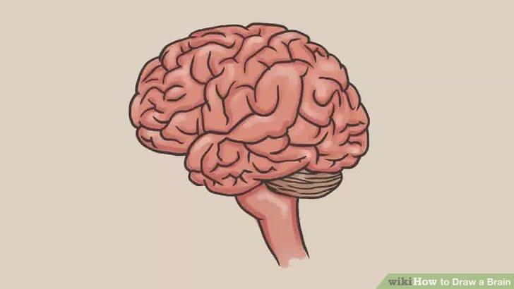 Drawn brains A Brain 7 a Image