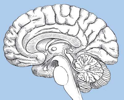 Drawn brains Brain's brain drawing Manual of