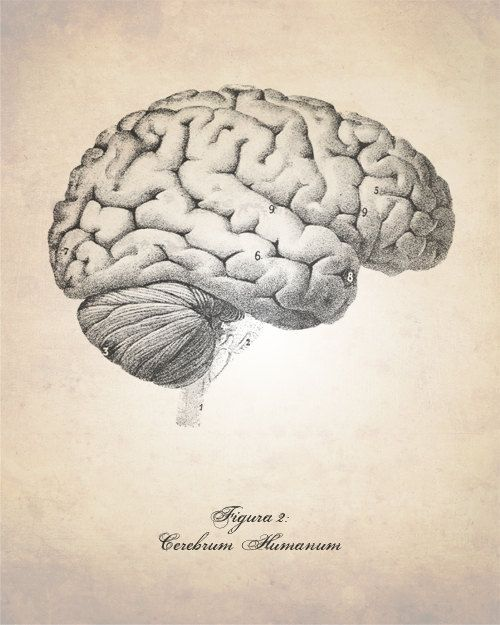 Drawn brain art #1