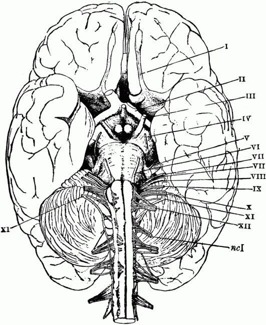 Drawn brains blank And Anatomy anatomy Coloring ideas