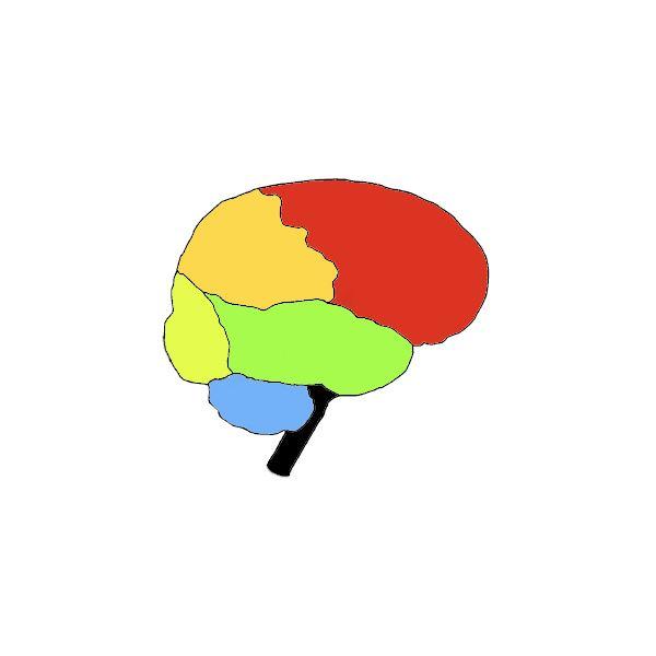 Drawn brains blank The Parts Brain to Basic