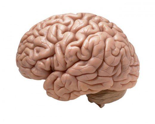 Drawn brains blank Cure Get Tips foggy Brain