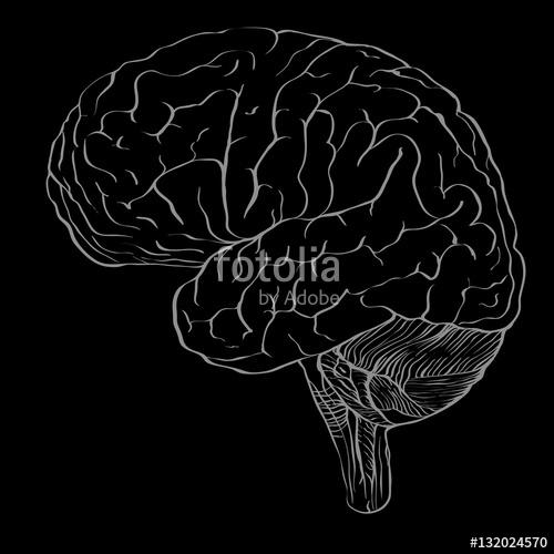 Drawn brains blank Brain drawing Profile brain in