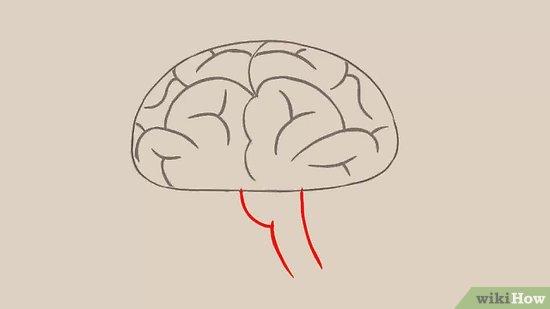 Drawn brain comic Draw to a 3 wikiHow