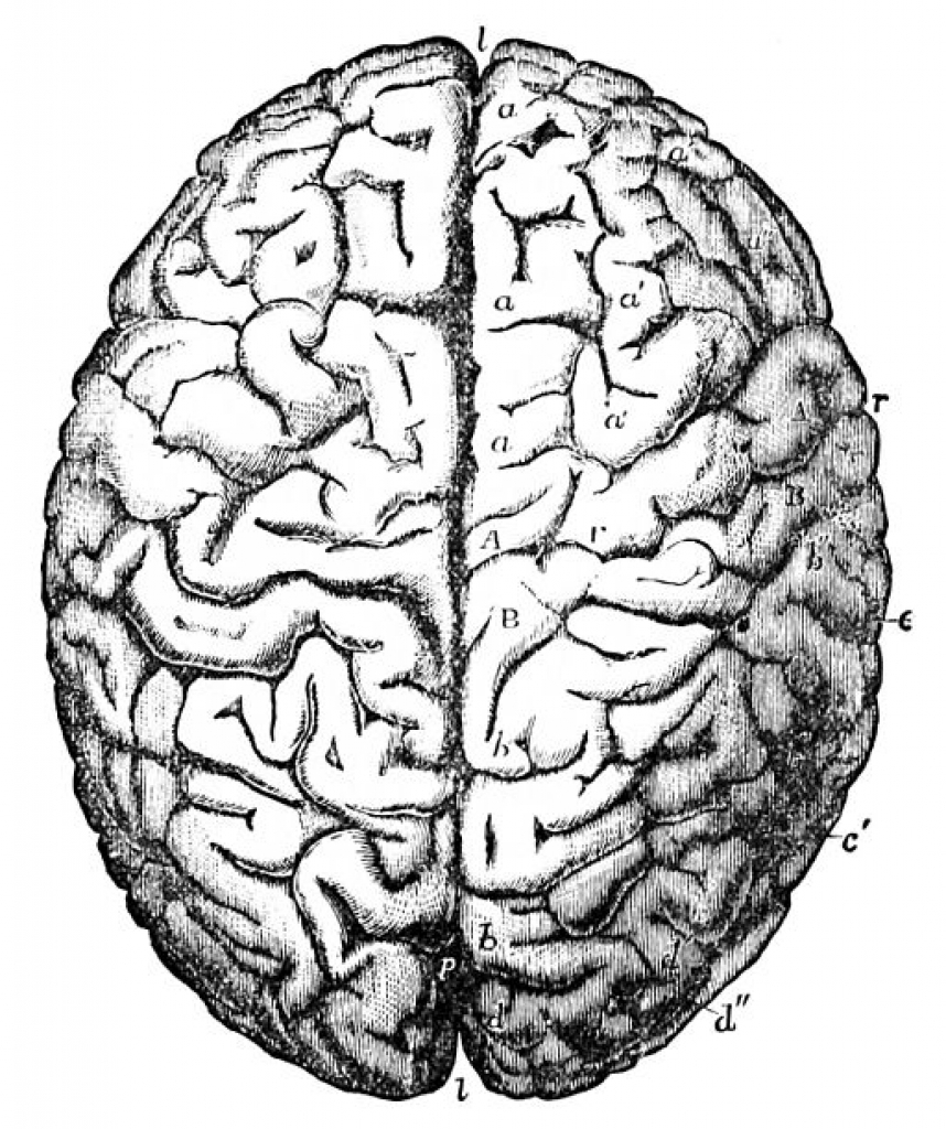 Drawn brains clip art Best clipart of X drawing