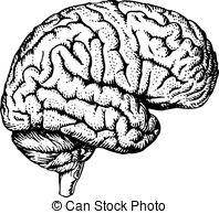 Drawn brains clipart background 879 white free royalty Art