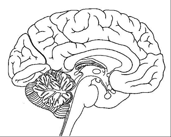 Drawn brain coloring page #1