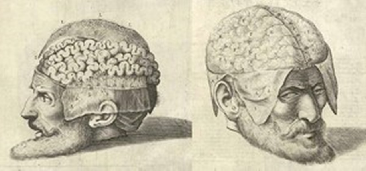 Drawn brains dissection Dissecting :: Head Through Anatomical