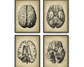 Drawn brains dissection Brain Brain Etsy Print 4