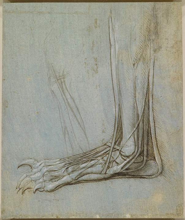Drawn brains dissection Of the Leonardo there and
