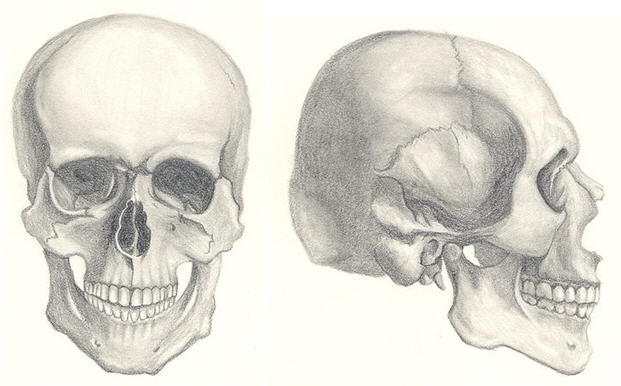 Drawn sleleton basic To Tutorials Skull Draw Drawn