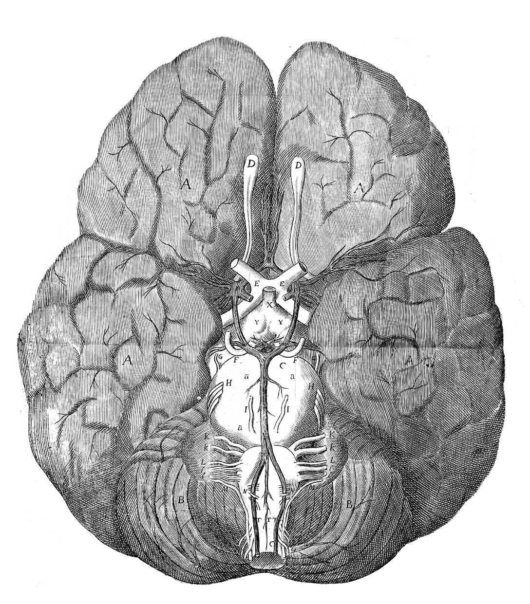 Drawn brains gray's anatomy The of  of of