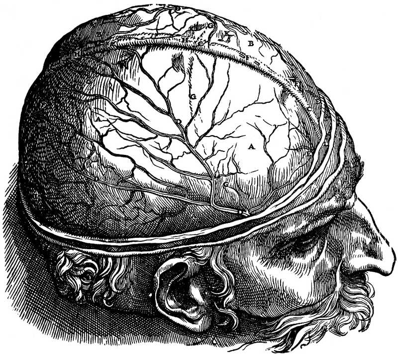 Drawn brains gray's anatomy William Dr cerebrovortex dura_mater_1lg 2014