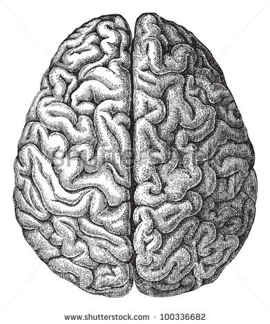 Drawn brains gray's anatomy / / brain IllustrationDrawing 1897