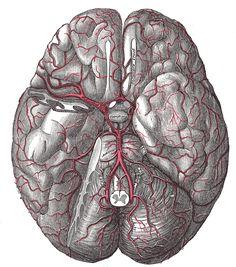 Drawn brains gray's anatomy The on 516 by brain