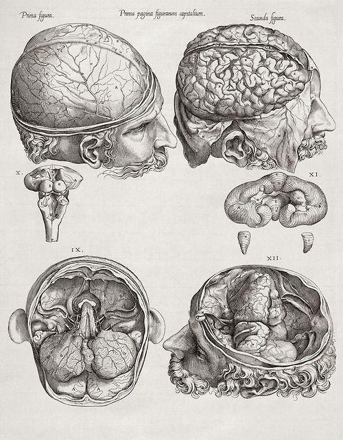 Drawn brains gray's anatomy For result brain GOOD Image