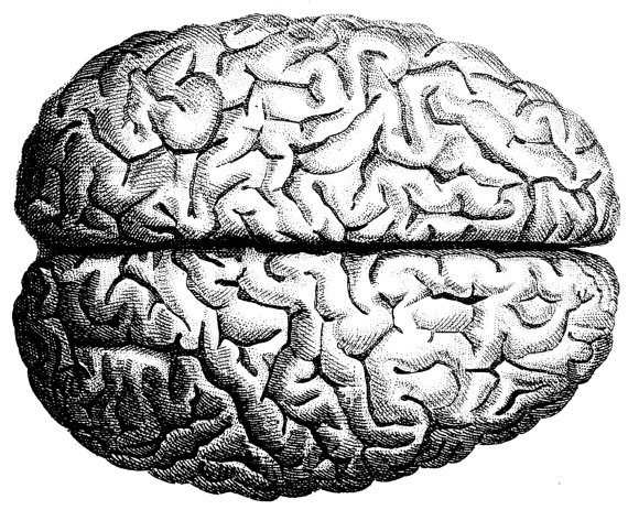 Drawn brains gray's anatomy Pin  this Poster an