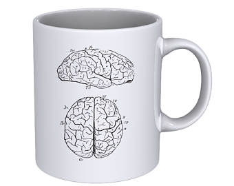 Drawn brains half Hand Gift Anatomical drawn Hand