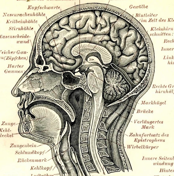 Drawn brains head anatomy Anatomy poster lithograph Zombies 1894
