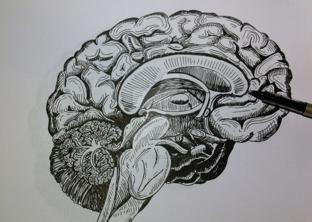 Drawn brains head anatomy By DeviantArt drawing Brain Anatomy