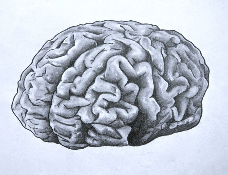 Drawn brains head anatomy About Pinterest images Brain Anatomical