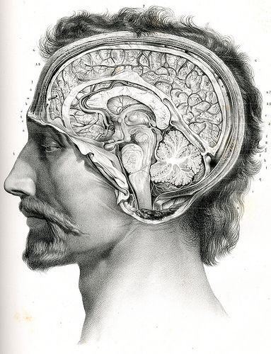 Drawn brains head anatomy And and anatomy