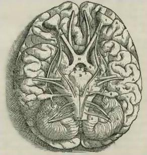 Drawn brain human body #3