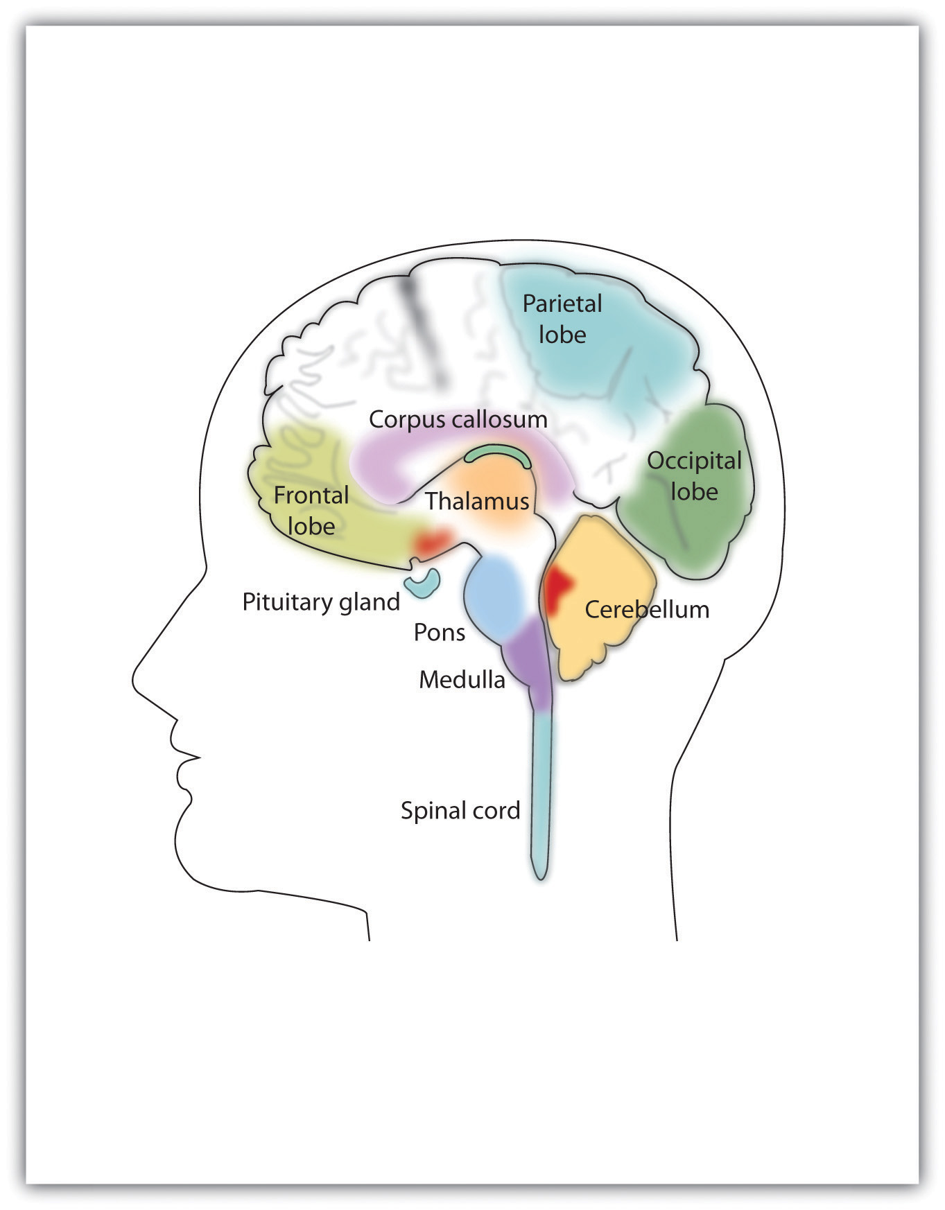 Drawn brains labeled part Control and Feelings  Thoughts
