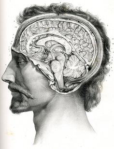 Drawn brains morbid In I been interested Google