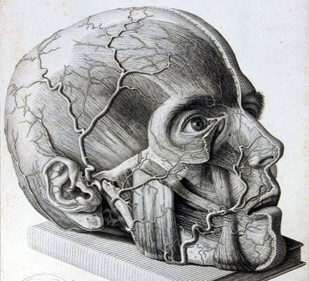 Drawn brains morbid Marzieh Image Morbid Collection for