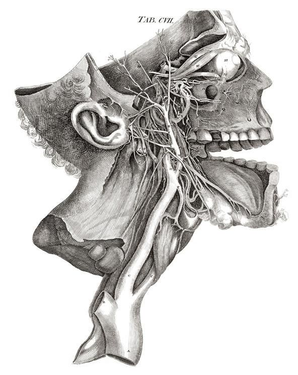 Drawn brains neck anatomy Handpicked and human 10+ discover