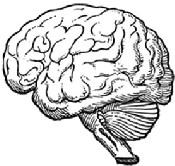 Drawn brains neuroscience Blog brain Blindness and line