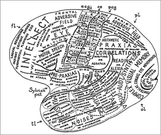 Drawn brains neuroscience And different and Society brain