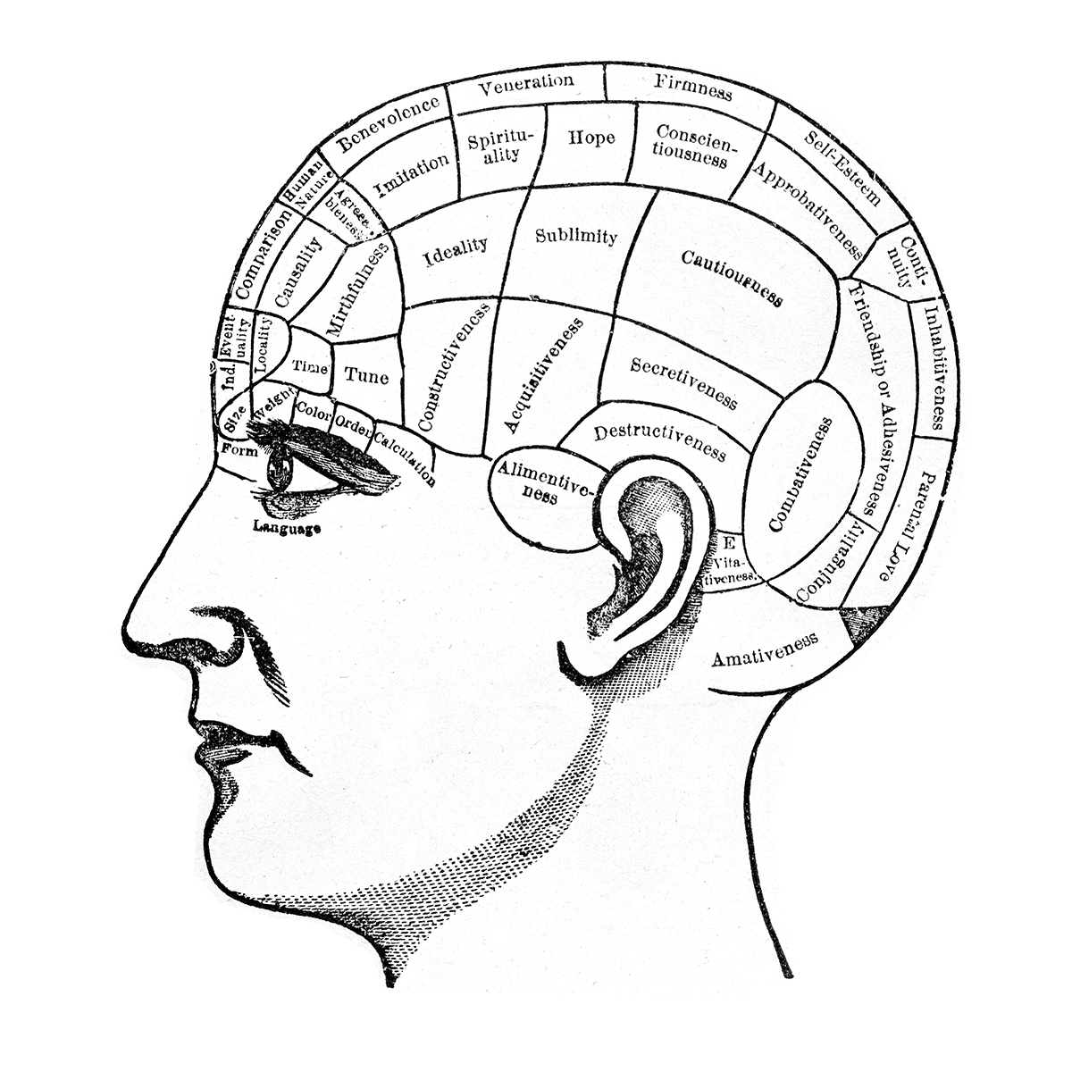 Drawn brains neuroscience Giant of  Neuroscience about