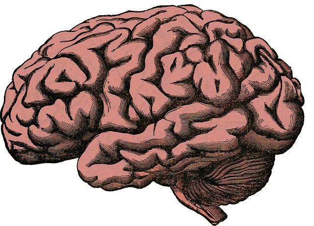 Drawn brains normal Vs Amino are research Killers