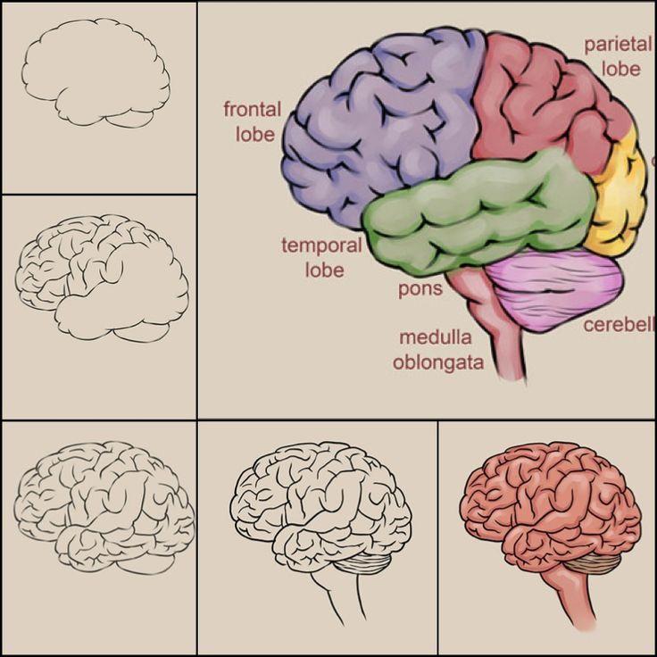 Drawn brains not 25+ Best Brain on Pinterest