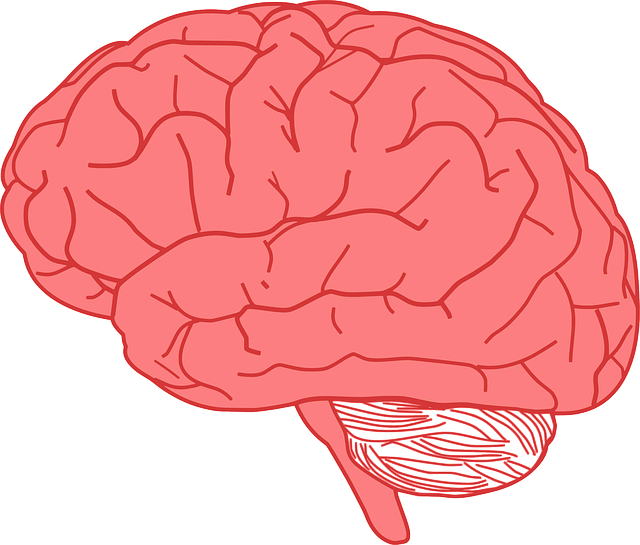 Drawn brains pink brain Kid brain Cool Facts Brain