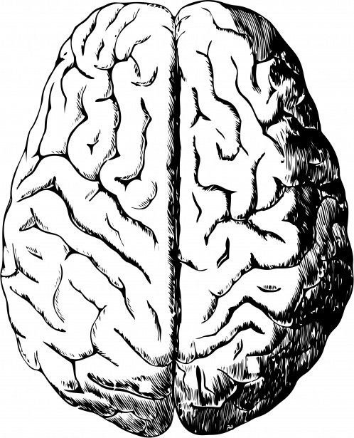 Drawn brains public domain Brain Pictures Public Photo Free
