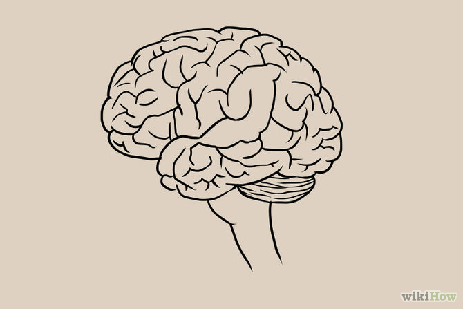 Drawn brains sketched 6Outline drawing I your by