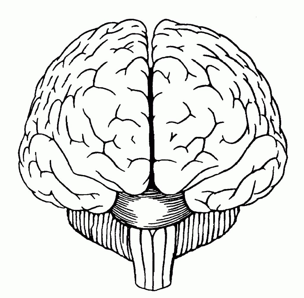 Drawn brains sketched  Brain Simple Drawing Gallery
