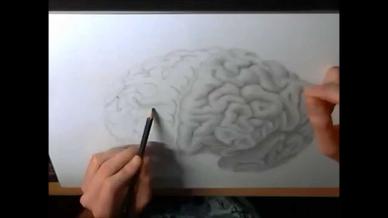 Drawn brains sketched Drawing Brain Drawing) a with