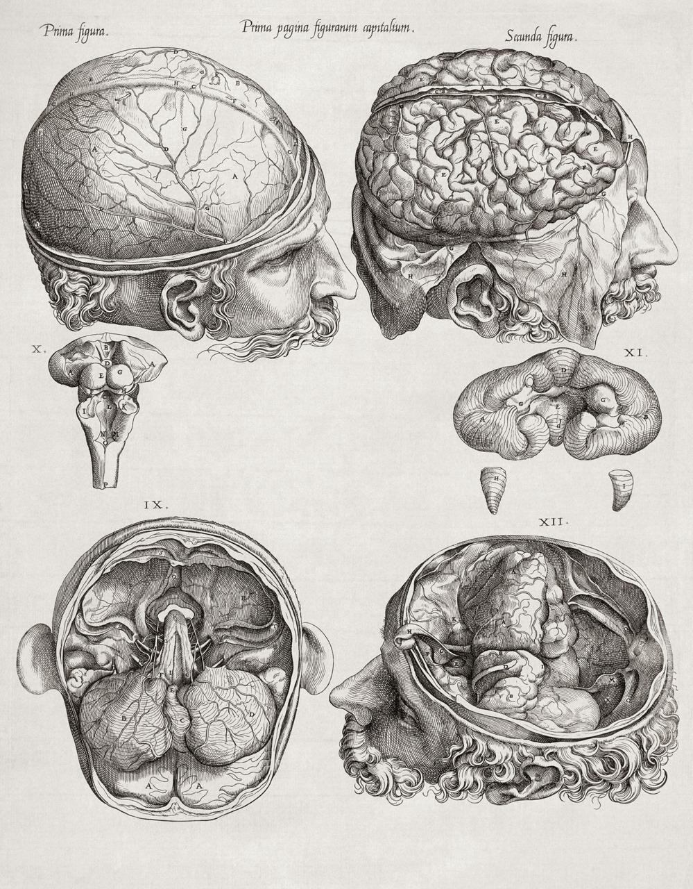 Drawn brains sketched Anatomy tumblr_ld3dwux7lu1qf9ueyo1_1280 illustrations jpg