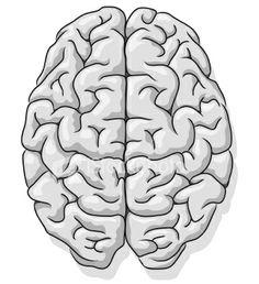 Drawn brains sketched Brain Vintage top anatomical