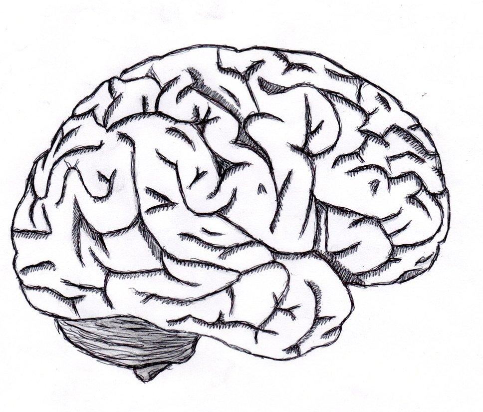 Drawn brains sketched Brain by Sketch NeverenderDesign DeviantArt