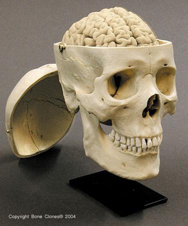 Drawn brains skull Tutorials Black Drawn Skull: ostheological