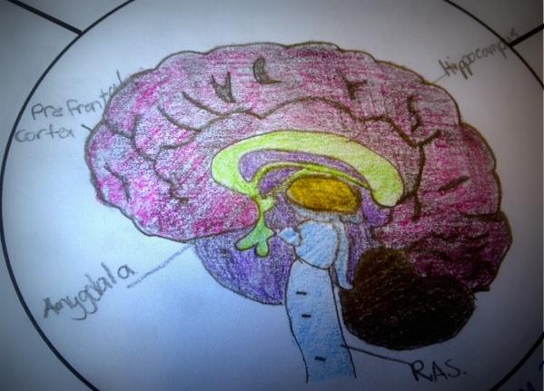Drawn brains student Began grade 6's time them