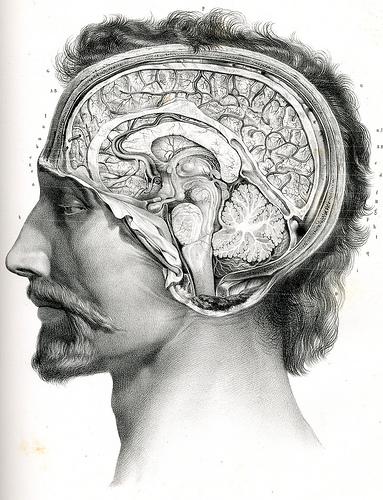 Drawn brains surgical Original BRAIN in always very