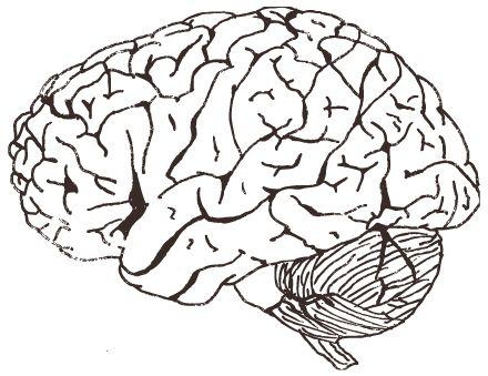 Drawn brain transparent background #1