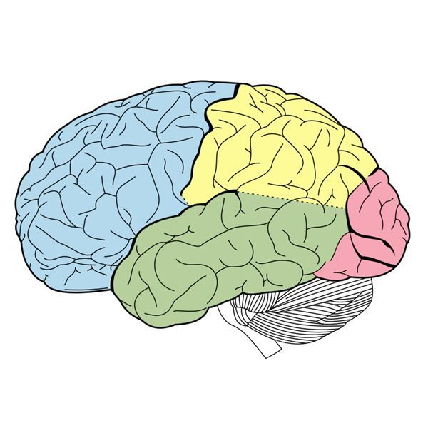 Drawn brains unlabelled Pinterest 25+ Unlabeled on of