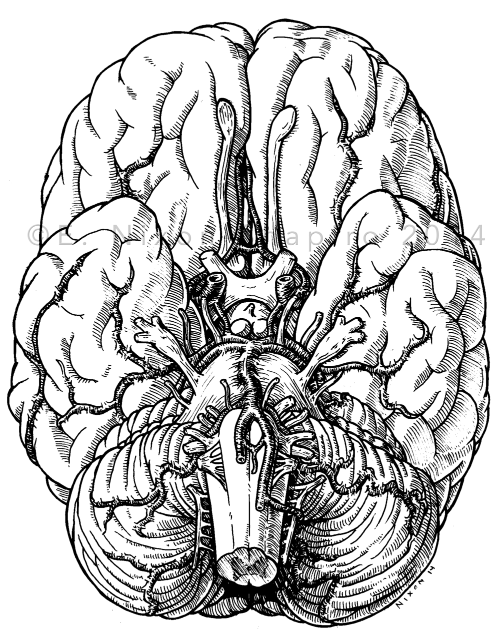 Drawn brain abstract White Illustration — the Media